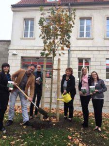 Read more about the article Ein Baum für Gatersleben von der Salzlandsparkasse