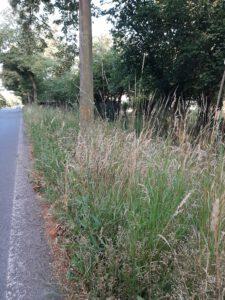 Ungepflegter Straßengraben am Schwabeplan – Landkreis ist verantwortlich, entzieht sich aber jahrein und jahraus