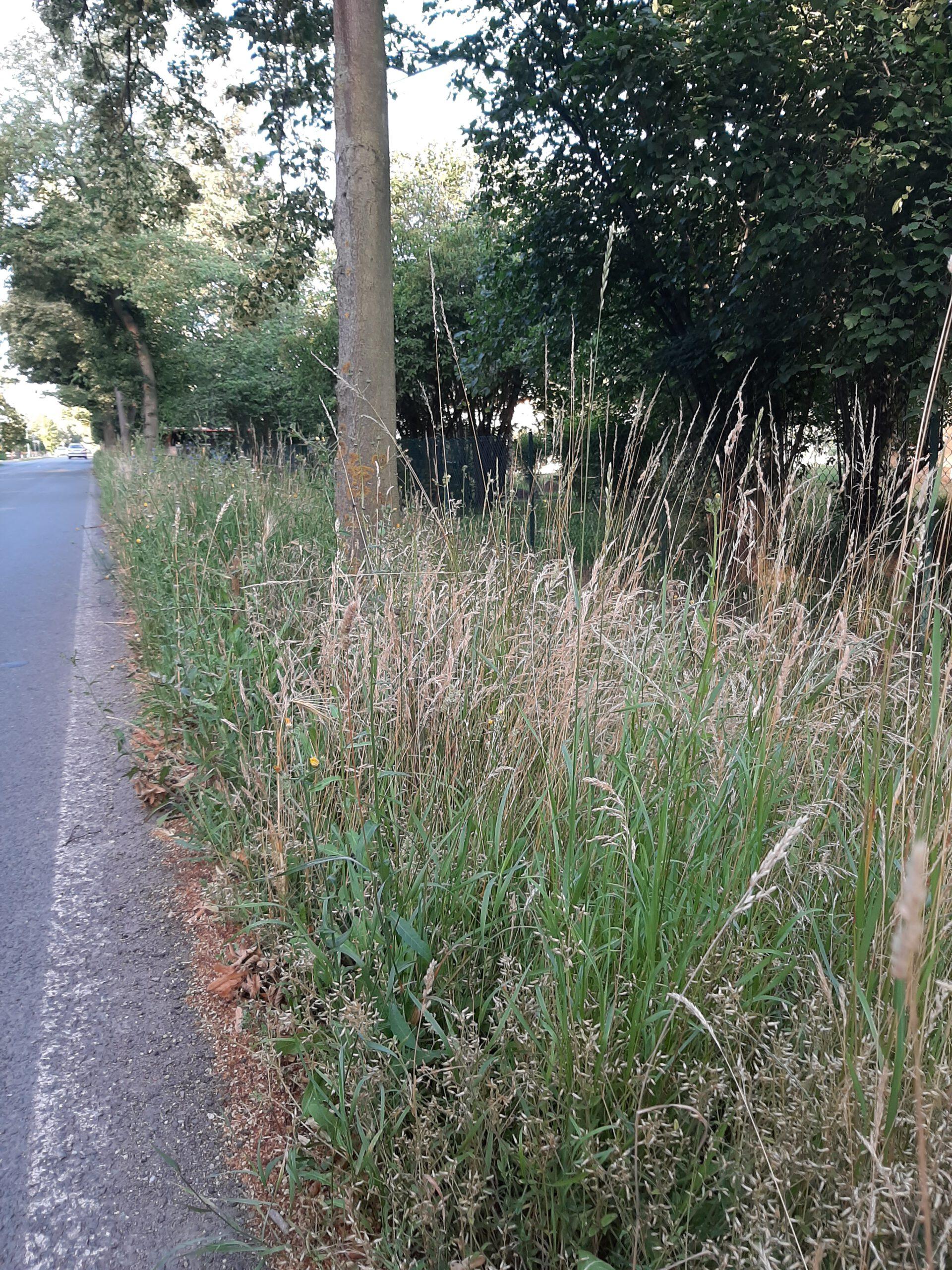 You are currently viewing Ungepflegter Straßengraben am Schwabeplan – Landkreis ist verantwortlich, entzieht sich aber jahrein und jahraus