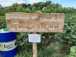 Read more about the article Sonnenblumen zum Selberpflücken