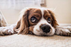 Read more about the article Ortschaftrat Steve Brose fragte im Ortschaftsrat wiederholt die Bürgermeisterin an: Was hat die letzte Hundesteuererhöhung die Stadt gekostet und was hat diese eingebracht?