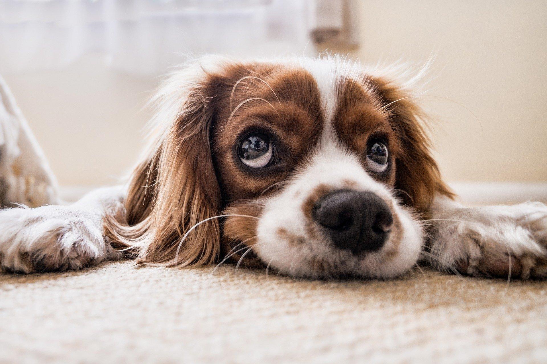 Ortschaftrat Steve Brose fragte im Ortschaftsrat wiederholt die Bürgermeisterin an: Was hat die letzte Hundesteuererhöhung die Stadt gekostet und was hat diese eingebracht?